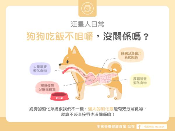 狗狗「不咀嚼只吞」吃超快? 别担心...牠们肠胃hen强大