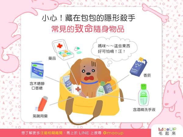 常把毛孩放在随身包里? 「5大致命物」对狗狗hen危险!