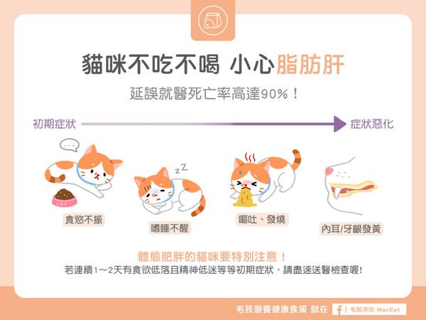 家有肥猫当心啊! 猫咪突然不吃不喝?小心「脂肪肝」