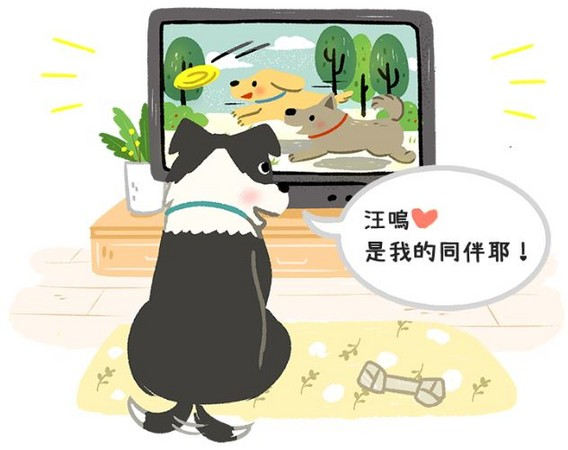 狗狗超爱看电视?牠们真看得懂? 「背后奥秘」大公开!