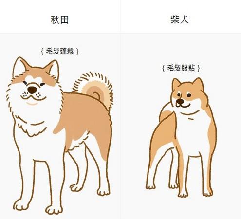柴柴、秋田傻傻分不清? 「3大特征」分辨!别再认错啦