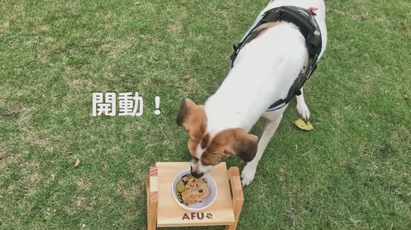 超澎派狗狗年菜! 极鲜「清蒸狮子头」毛孩怎会不爱?