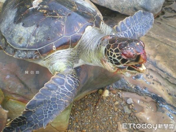 动物 龟 598_450