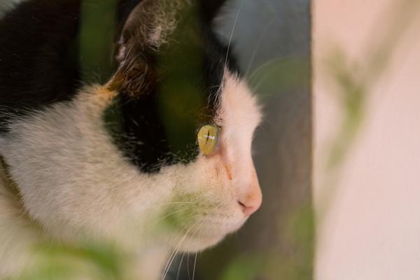 猫最讨厌人类做「10件事」! 乱戳手、不梳毛都会很Sad