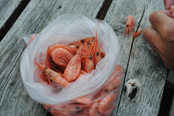容易积在虾头处,民众下肚后容易产生皮肤红痒,长寻麻疹等过敏反应,吃