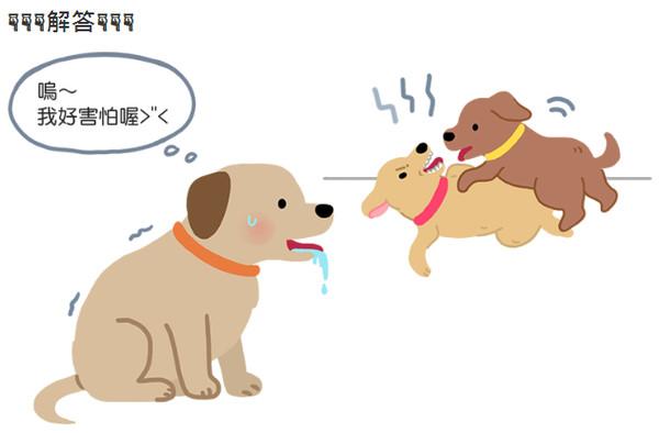 狗狗「狂流口水、尾巴下垂」在想啥?背后真相主人好心疼