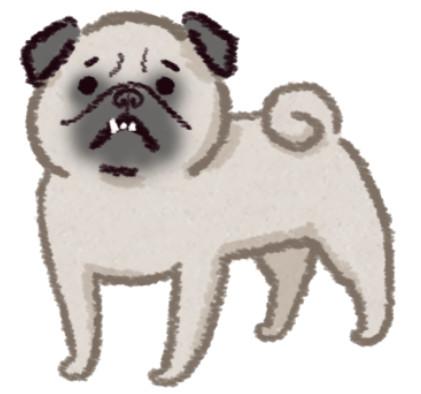 「口腔状况最堪忧」6种狗狗 吉娃娃的小嘴竟要挤42颗牙