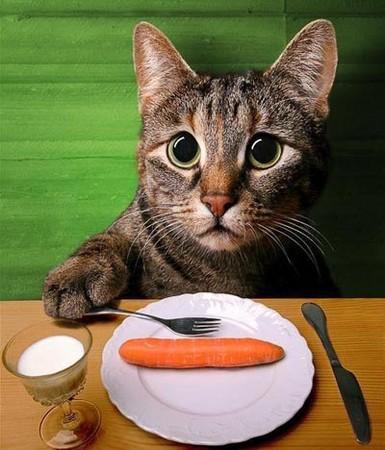可爱的一对猫咪简图