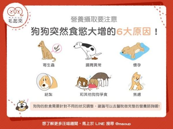 狗狗食欲爆增的「6关键原因」揭晓!第6个让奴才好心疼啊~