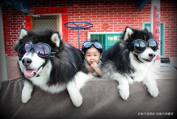 外国小孩与动物相处图片
