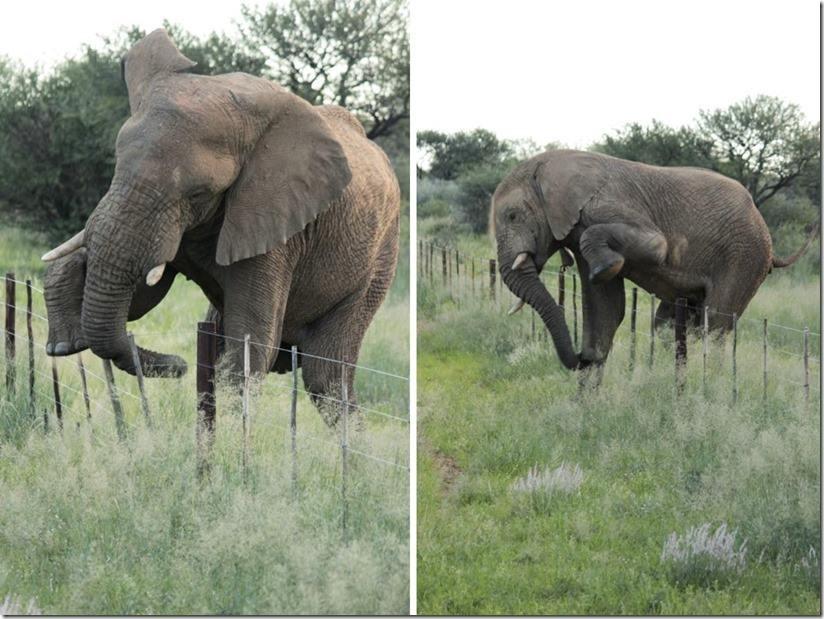 壁纸 大象 动物 824_619