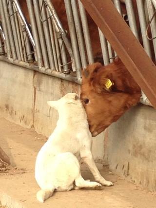连狗狗都有牛当情人,那我该怎麽办