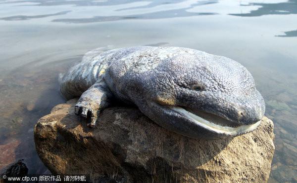后经承德市水产专家证实,原来是条在我国北方地区十分罕见的两栖动物&