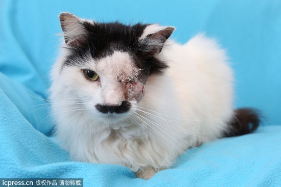 「巴茲」原本的模樣。(圖/東方IC) 記者林蕙娟/綜合報導 英國格魯斯特郡(Gloucestershire)有隻名叫「巴茲」(Baz)的家貓,綽號叫「奇特勒」(Kitler),因為鼻子和嘴上的黑毛像納粹領袖希特勒(Hitler)的鬍子。日前這隻溫馴的黑白貓失蹤,被發現困在垃圾桶裡奄奄一息,甚至失去了左眼。 英國多家媒體報導,「巴茲」的飼主克莉斯蒂(Kirsty Sparrow)認為,就是因為牠的「鬍子」,而慘遭暴徒「針對性的攻擊」,「牠長得像希特勒又不是牠的錯,其實牠很甜美可愛又膽小啊!對於虐待動物的人