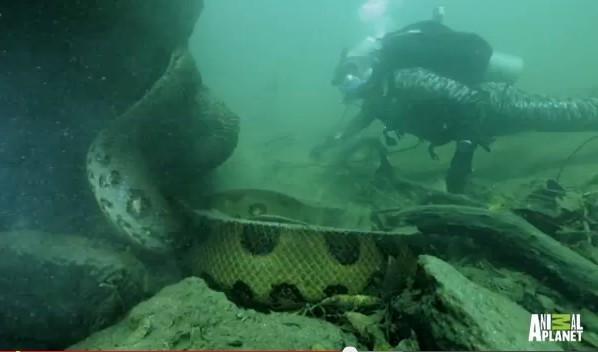 杰里米是跟随的《动物星球》摄制组前往巴西亚马逊河