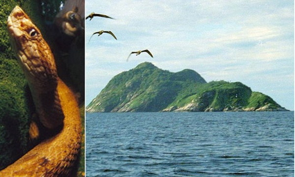 巴西有座最致命「蛇岛」