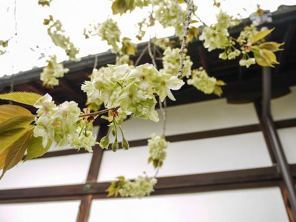 花瓣网场景步骤
