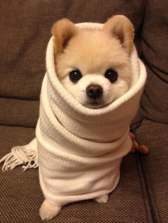 动物很冷的图片