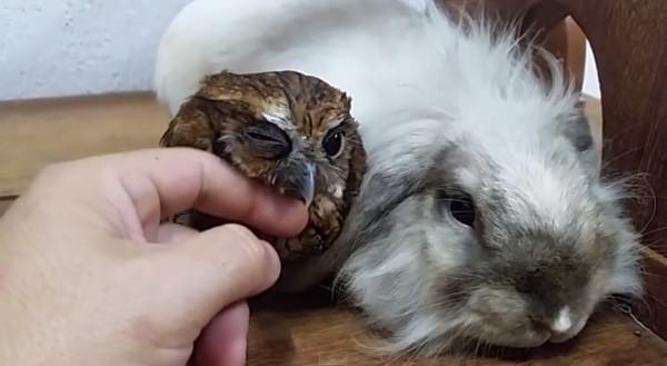 兔子的天敌是什么动物