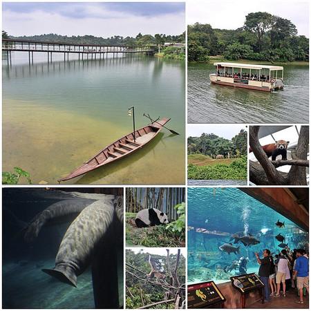 新加坡夜间野生动物园是新加坡野生动物保育集团的一部分,并已被政府