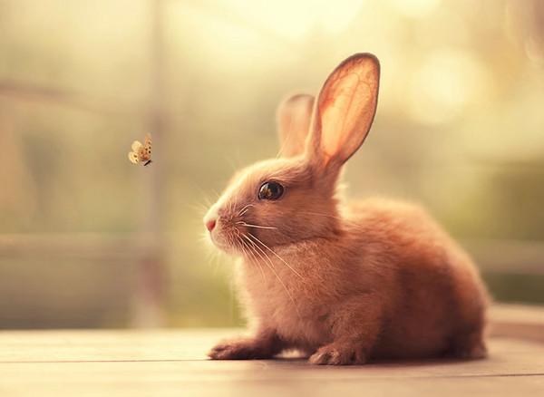 会展开一系列的兔子摄影,是因为7个月前,他领养了两只可爱的小兔子