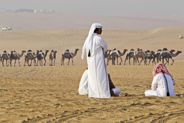 小駱駝都染MERS!沙烏地阿拉伯確診1029人 死亡452人(圖/達志影像/美聯社)