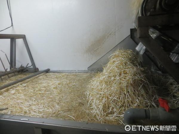 ▲黑心豆芽菜加「保險粉」漂白 業者坦承:12年前開始用。(圖/食藥署提供)