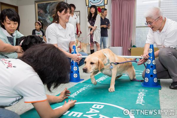 ▲導盲犬體適能。(圖/公關提供)
