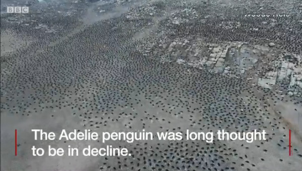 ▲無人機技術! 空中發現南極危險群島的龐大「企鵝國」