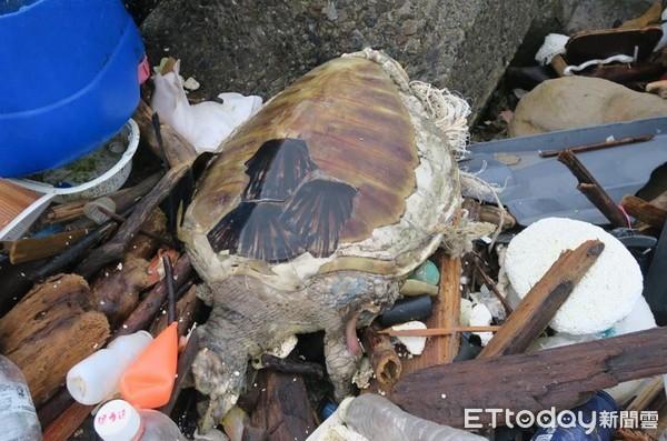 ▲清出38.2公噸垃圾!每年釀海龜枉死,「請停止一次性塑膠製品」(圖/網友陳信助提供,請勿隨意翻拍,以免侵權。)