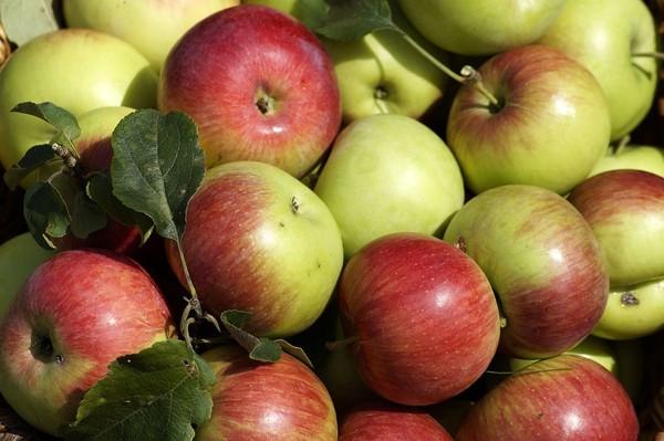 ▲紅蘋果,青蘋果。(圖/取自免費圖庫Pixabay)