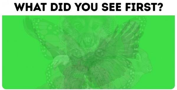 ▲從第一眼看出何種動物測內在個性。(圖/翻攝國外網站《Bright Side》)