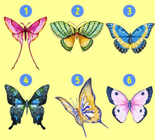 ▲哪隻蝴蝶最吸引你?一張圖看出「隱藏人格」。(圖/取自國外網站《Bright Side》)