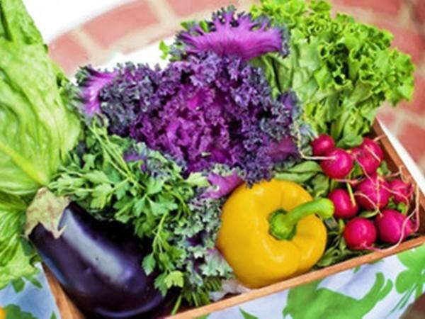 ▲蔬菜(圖/取自免費圖庫pixabay)