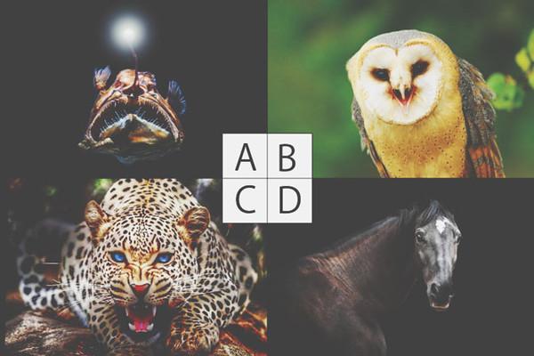 ▲你想變成啥動物?一張圖看出你的優點在哪。(圖/翻攝自日本網站《Uranaitv》)
