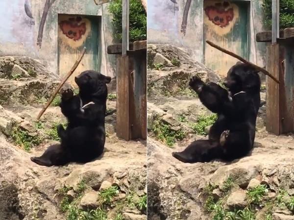 ▲黑熊耍棍數度k到頭。(圖/翻攝自推特@38kCat)