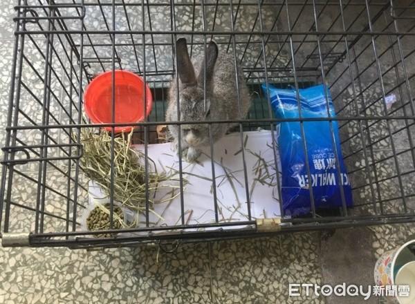 ▲寵物兔遭棄陽光下曝曬超過6小時。(圖╱網友曾先生授權提供)