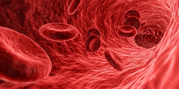 ▲▼血管,血液,血管硬化。(圖/翻攝自pixabay)