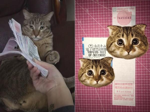 發票「繞貓頭」3圈就會中? 她實測成功…釣出一票「中獎貓奴」