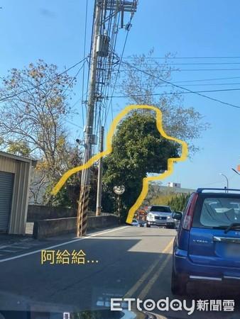 ▲▼路邊驚見8公尺高綠色貴賓犬。(圖/網友林奕成授權提供)